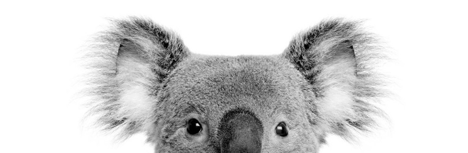 australian broker thumb